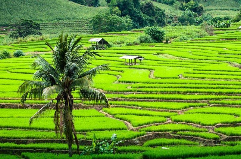 Chiang-Mai-014.jpg