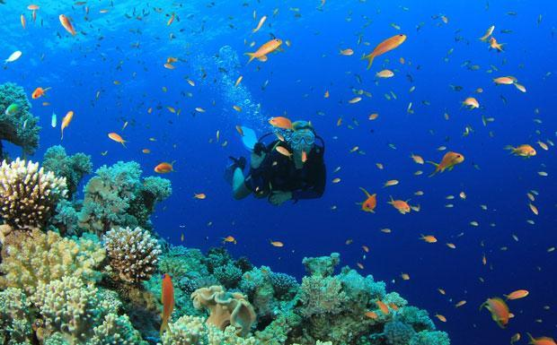 Snorkel and Scuba Diving in Phuket