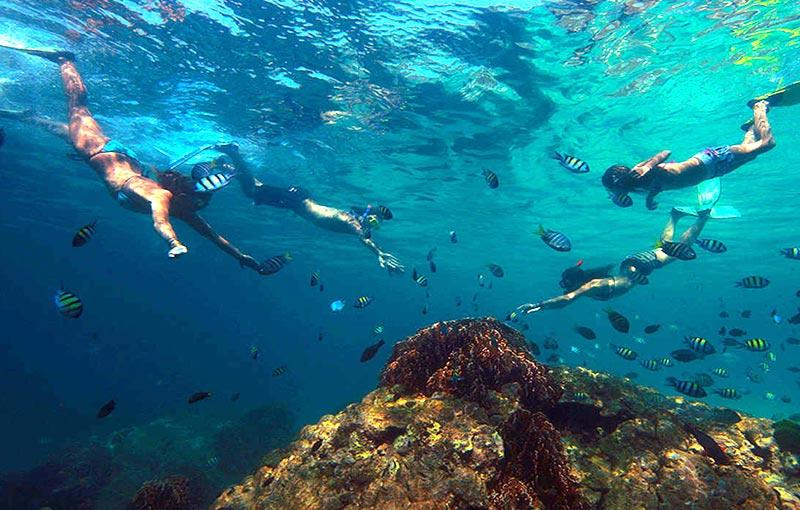Krabi Marine Life